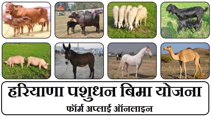 Haryana Pashudhan Bima Yojana